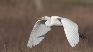 Escursioni nel parco San Rossore Massaciuccoli nella due giorni di 'Birdwatching'