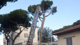 Il vento fa chiudere l'Aurelia. 40 interventi dei pompieri a Grosseto
